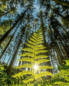 """Christian Majcen's Instagram post: """"Do you love green? Was gibt's schöneres als an heißen Sommertagen eine Wanderung im Wald zu machen? Am besten natürlich im Waldviertel 👌 .…"""" Perfect Pic, Vineyard, Poster, Outdoor, Instagram, Woodland Forest, Nice Asses, Outdoors, Vine Yard"""