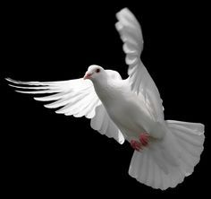 DOVE - The emblem of purity. A descending dove represents Holy Spirits.