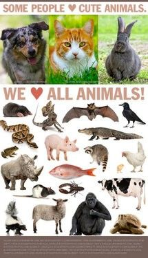 "Some ppl only ♥ ""cute"" animals. Reoin if u ♥ ALL animals! #cute #animals #love #cute #animalrights"