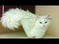 """Funny cats fails compilation 2016 - http://positivelifemagazine.com/funny-cats-fails-compilation-2016/ http://img.youtube.com/vi/iyBh1ZlT0ZA/0.jpg *Today Special Deal*  This vedio is about funny cats fails compilation.This chennal is about fun entertainment and information.This vedio is very entertaining and informative.please … *Today Special Deal* Please follow and like us:  var addthis_config =   url: """""""",  title: """""""""""