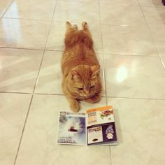Just a cat reading a magazine...