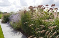 Dutch designer Andrew van Egmond planted a private garden of horizontal lines seen in soft wood hardscaping, ornamental grasses, and flowering herbs. Perennial Grasses, Ornamental Grasses, Perennials, Perennial Gardens, Garden Design Magazine, Meadow Garden, Minimalist Garden, Garden Architecture, Natural Garden