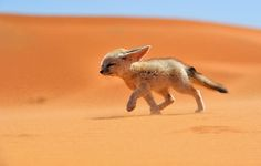 http://www.demilked.com/beautiful-foxes-wildlife-photography/