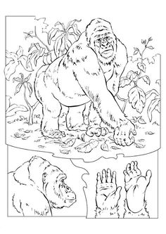 coloring page Gorilla