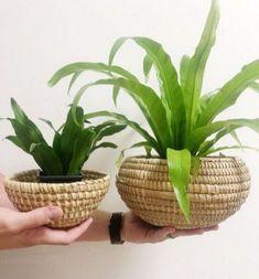 The Insider Secrets For Heavy Duty Flower Planter Discovered 150 Plant Basket, Basket Planters, Large Planters, Vintage Planters, Flower Planters, Small Plants, Indoor Plants, Inside Plants, Mini Plants