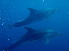 A Dolphin Encounter in New Zealand | The Planet D Adventure Travel Blog