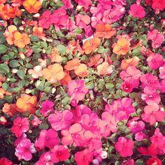<< flowers make me happy >>