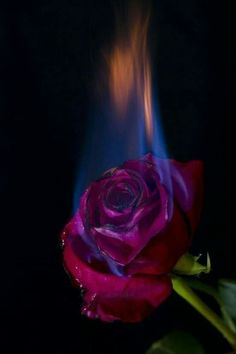 Burning Rose Burning Rose Burning Rose Source By Burning Rose Burning Rose Aesthetic Backgrounds, Aesthetic Iphone Wallpaper, Aesthetic Wallpapers, Hd Backgrounds, Burning Rose, Burning Flowers, Rose On Fire, Photo Rose, Aesthetic Roses