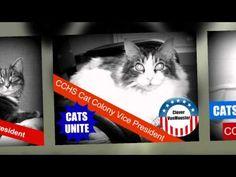 CCHS CATS UNITE!