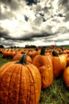 #halloween #autumn #pumpkins