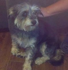 #COPets #COFlood Found dog in #Frederick Colorado. No tags. Call 303-513-8779 Please share