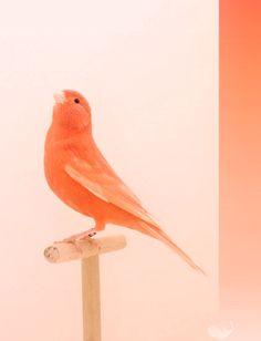 Coral bird photograph by Luke Stephenson Orange Aesthetic, Aesthetic Colors, Aesthetic Collage, Color Melon, Orange Color, Pretty Birds, Beautiful Birds, Peach Colors, Colours