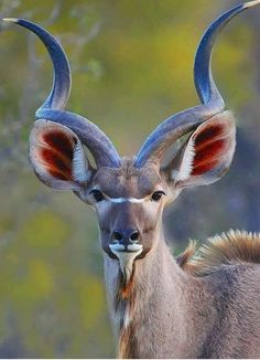 This powerful portrait of a Kudu antelope bull was taken by wildlife photographer Neal Cooper.   https://www.facebook.com/CooperNaturePhotos/