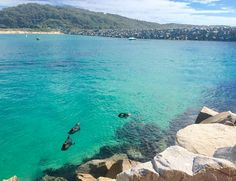 Best #beach #camping between #Sydney and #Melbourne Australia. Check it out now! www.parkmyvan.com.au #ParkMyVan Australia #Travel #RoadTrip #Backpacking #VanHire #CaravanHire