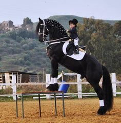Love this! Oh, those Friesians!