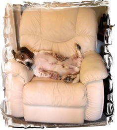 You can find a version of this at my house just about any day of the week. I Love Dogs, Puppy Love, Cute Dogs, Basset Puppies, Dogs And Puppies, Body Pillows, Cutest Dog Ever, Bassett Hound, Small Animals