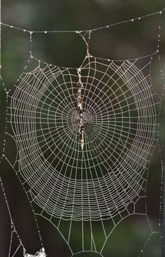 The art of spider webs. - Spider web pic by Mike Powell. Spider Silk, Spider Art, Spider Webs, The Ancient Magus Bride, Itsy Bitsy Spider, Dew Drops, Patterns In Nature, Amazing Spider, Natural Wonders