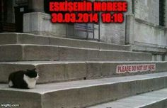 Esk mobese