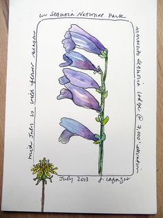 from my sketchbook - Lesson Flowers - Sketching & Watercolor: Journal Style ~ January 2015 Watercolor Sketchbook, Pen And Watercolor, Botanical Drawings, Botanical Art, Sketchbook Drawings, Sketches, Fashion Sketchbook, Sketch Art, Doodle Drawings
