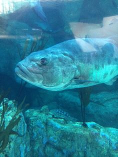 The Aquarium of the Pacific in Long Beach, CA is a wonderful place to visit, filled with educational opportunities and fun activities for the whole family. Long Beach, Fun Activities, Aquarium, California, Fish, Animals, Goldfish Bowl, Animales, Animaux