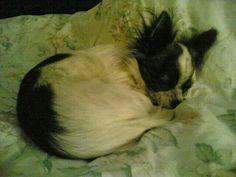 Athos  in uno dei suoi sonni profondi e sognanti le sue morosette fighelle.