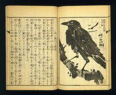 Brooklyn Museum - Gyosai Kadan Nihen (Pictorial Accounts of Gyosai), Part II, Volume 4- Kawanabe Kyosai - overall