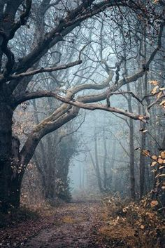 scary photography tree Cool creepy photo landscape trees photograph alone fall nature forest autumn brown road mist leaves landscapes Woods deviantart fog leaf neat Oer-Wout Animals Plants & Nature autumn wood Beautiful World, Beautiful Places, Beautiful Pictures, Beautiful Scenery, Nature Pictures, Simply Beautiful, Belle Photo, The Great Outdoors, Mother Nature