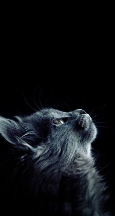 - My best shares Animal Print Wallpaper, Cat Wallpaper, Warrior Cats, I Love Cats, Cool Cats, Beautiful Cats, Animals Beautiful, Animals And Pets, Cute Animals