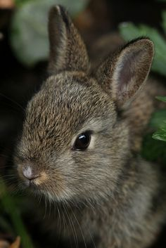 transylvanialand: Young Rabbit by jenny*jones on. Cute Creatures, Beautiful Creatures, Animals Beautiful, Baby Bunnies, Cute Bunny, Bunny Rabbit, Mundo Animal, My Animal, Cute Baby Animals