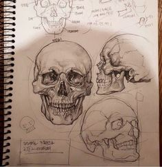 Excellent Pictures skull drawing tutorial Thoughts Desire to learn how to draw? You're in the proper place. Whether you're a starter trying to find Inspiration Art, Sketchbook Inspiration, Journal Inspiration, Drawing Sketches, Art Drawings, Sketching, Drawings Of Skulls, Anatomy Sketches, Poster Drawing