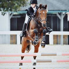 @hunterjumperqueen || pinterest's equestrian queen