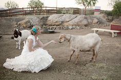 I'd liked to have had goats at my wedding too!