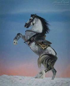 Магическая красота андалузских лошадей!