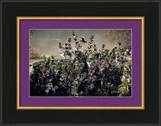Morning Dew Framed Print featuring the photograph Morning Dew Backlight by Sverre Andreas Fekjan Morning Dew, Photograph, Framed Prints, Painting, Art, Photography, Painting Art, Paintings, Kunst