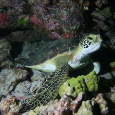 Turtle Rock, Small Turtles, Wild Creatures, Tortoises, Oceans, Under The Sea, Animal Pictures, Life Is Good, Calm