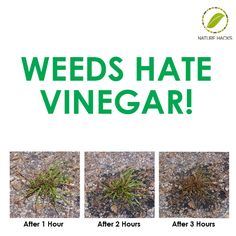 1 Gallon of White Vinegar 1/2 Cup Liquid Dish Soap 2 Tablespoons of Salt Spray the leaves and stems of weeds and avoid the surrounding plants. This mixture is potent enough to remove those tough weeds that come out of bricks.