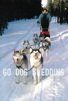 N & E did a photography helicopter tour and dog sledding trip in Skagway, Alaska!! They LOVED it   :)