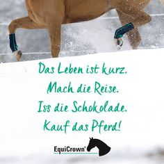Life is short. Buy the horse! EquiCrown: Your partner in compression therapy for horses. Trail Riding Horses, Horse Riding Quotes, Horse Quotes, Activities Near Me, Equine Quotes, Horseback Riding Outfits, Animal Movement, Whimsical Nursery, Horse T Shirts