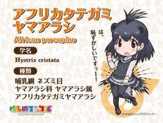 「けものフレンズ」第6話からさらにヘラジカ、パンサーカメレオン、シロサイ、アフリカタテガミヤマアラシです。今回はたくさんのフレンズさんに登場していただきました♪次回もお楽しみに! #けものフレンズ (link: http://kemono-friends.jp/zoo/) kemono-friends.jp/zoo/