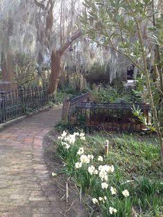 love spanish moss and this beautiful walkway