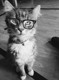 573 Best Kucing Lucu Images In 2019 Kawaii Drawings Kawaii