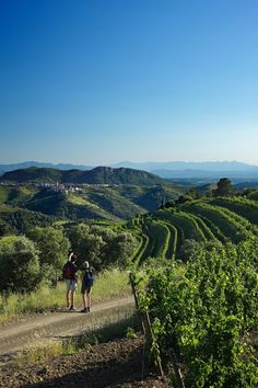 Vineyards at Gratallops.  Priorat  Catalonia