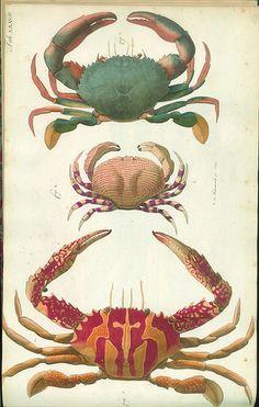 Versuch einer Naturgeschichte der Krabben und Krebse i