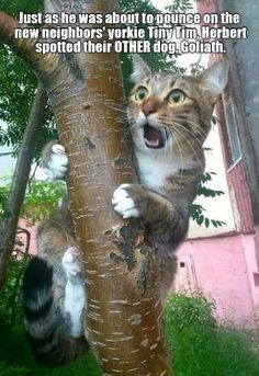 Silly Cats, Cute Cats And Kittens, Baby Cats, Cool Cats, Kittens Cutest, Funny Cats, Funny Animal Memes, Cute Funny Animals, Cute Baby Animals