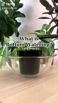 Planting Succulents, Garden Plants, Planting Flowers, Outdoor Plants, Water Plants Indoor, Indoor Plant Pots, House Plants Decor, Plant Decor, Pothos Plant Care