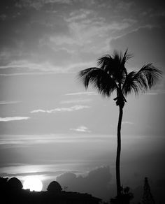 Sunset, Palm Tree, Clouds, View, Black and White, Wall Art, Picture, Home Decor by PhotosbyAnnaMarie on Etsy https://www.etsy.com/listing/232051891/sunset-palm-tree-clouds-view-black-and