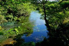 yuko style:柿田川湧水, spring Swimming, Japan, River, Outdoor, Swim, Outdoors, Swat, Japanese Dishes, Outdoor Living
