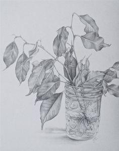 Charcoal Drawing Pencil Drawings by Natalie Cormier, via Behance - beautiful! Graphite Drawings, Cool Art Drawings, Pencil Art Drawings, Drawing Sketches, Drawing Ideas, Flower Drawings, Charcoal Drawings, Sketching, Botanical Art