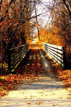Autumn Bridge Walk