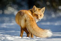19Fox Photography
